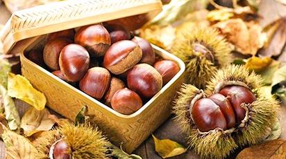 Sfaturi practice pentru plantarea și îngrijirea castanului comestibil