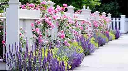 Plantele ornamentale - miracolul de pe pământ