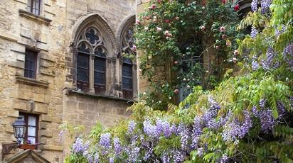 Plante pe care să le folosești în amenajarea grădinii din fața blocului