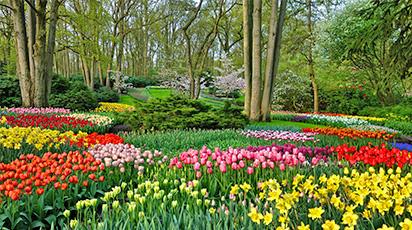 Plantează flori de primăvară pentru o grădină colorată și parfumată