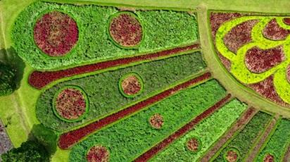 Proiectul tău de amenajare a grădinii. Etape de implementare