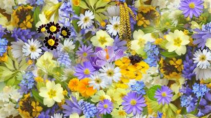 Semnificația și simbolistica florilor: Ghid pentru alegerea celor mai deosebite plante