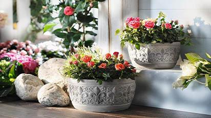 Sfaturi utile pentru îngrijirea plantelor de interior în repaus vegetativ