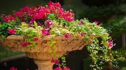 O grădină pregătită de primăvară: top 5 arbuști ornamentali rezistenți la ger