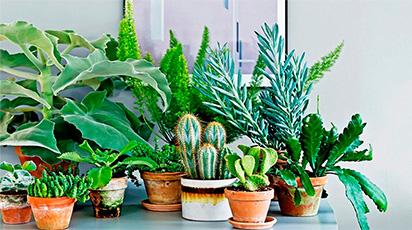 Top 5 întrebări despre îngrijirea plantelor de interior