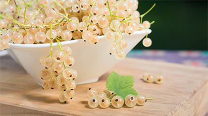 Totul despre coacăzul alb: de la plantare la îngrijire