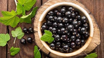 Umple-ți grădina de coacăze negre: îngrijirea culturii și bolile de care să te ferești