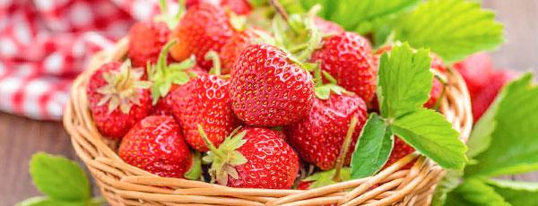 Plantarea căpșunilor în sezonul de primăvară