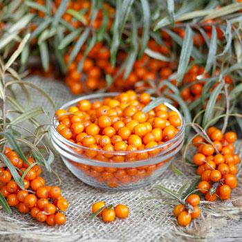 Beneficiile și daunele băuturii din fructe de cătină