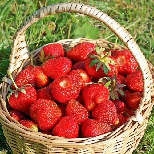 Căpșuni Amandine imagine 1 articol 9860
