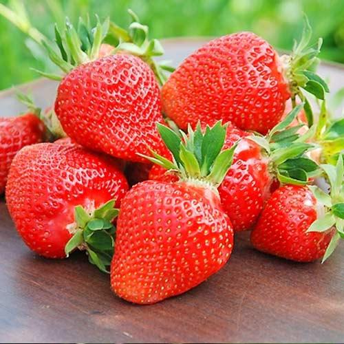 Căpșuni Clery imagine 1 articol 9833