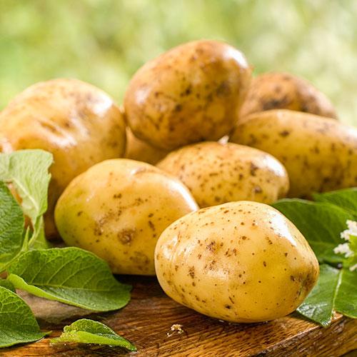 Cartofi de sămânță Constance imagine 1 articol 1086
