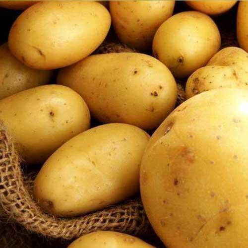 Cartofi de sămânță Esmee imagine 1 articol 1073