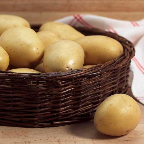 Cartofi de sămânță Mona Lisa imagine 1 articol 1076
