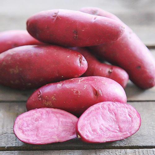 Cartofi de sămânță Mulberry Beauty imagine 1 articol 7807