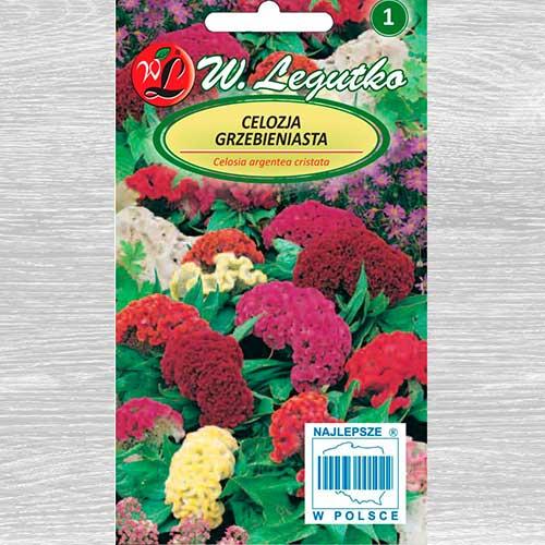 Celosia, mix multicolor imagine 1 articol 69573