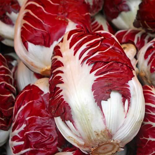 Cicoare de frunze (radicchio) Rossa di Treviso imagine 2 articol 69457