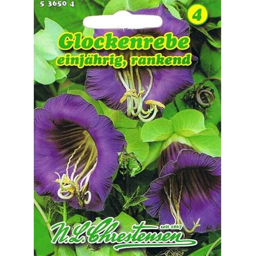 Cobaea Violettblau imagine 1 articol 78982