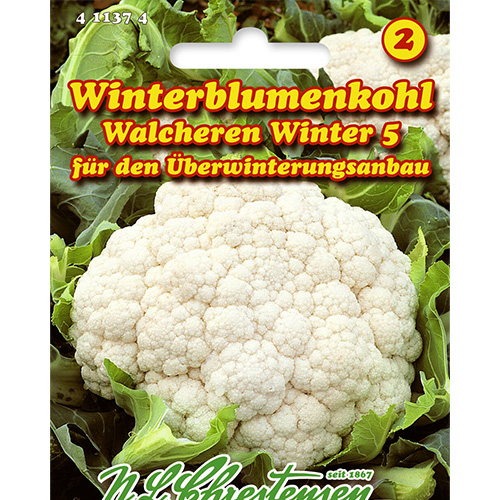 Conopidă Walcheren Winter 5 imagine 1 articol 86026