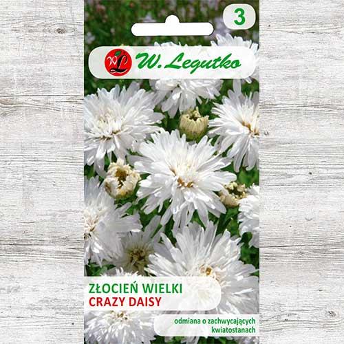 Crizantemă Crazy Days imagine 1 articol 86805