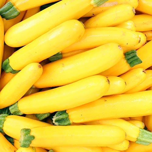 Dovlecel zucchini Atena Polka F1 imagine 2 articol 69464