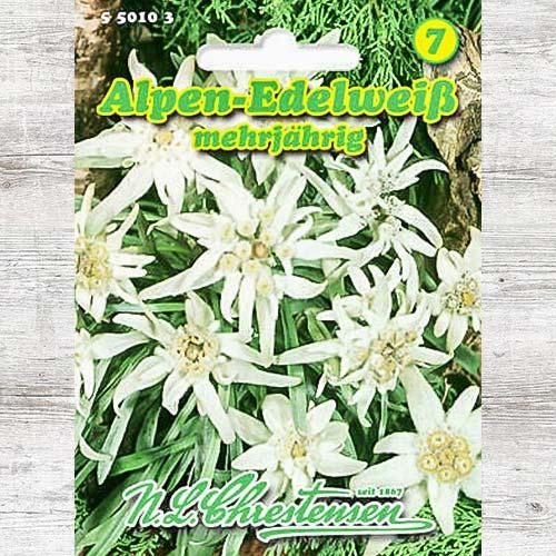 Floare de colț (Leontopodium alpinum) imagine 1 articol 86163