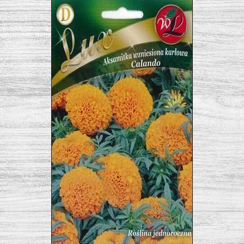 Gălbenele Calando portocalii imagine 1 articol 78653