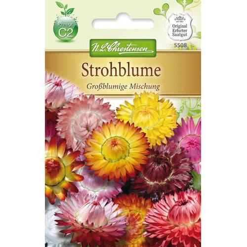 Helichrysum cu flori mari, mix multicolor imagine 1 articol 78978