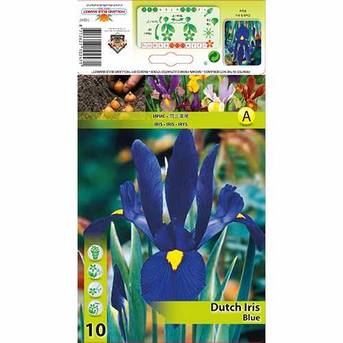 Iris olandez Blue imagine 1 articol 67602
