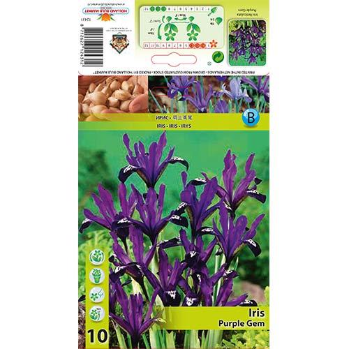 Iris Purple Gem