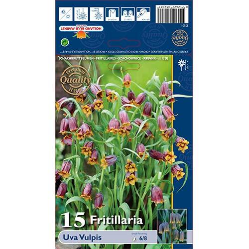 Lalea imperială (Fritillaria) Uva Vulpis imagine 1 articol 70245