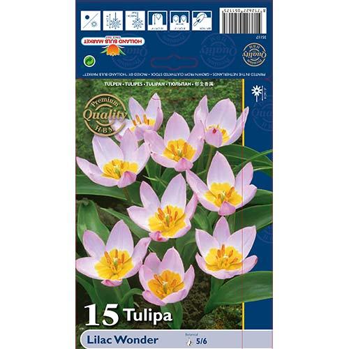 Lalele Lilac Wonder imagine 1 articol 67751