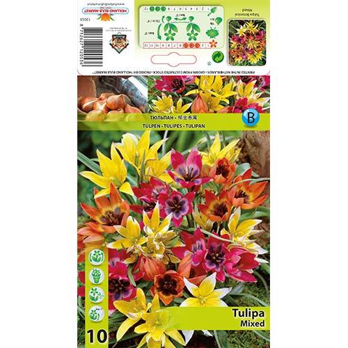 Lalele pitice mix multicolor imagine 1 articol 67873