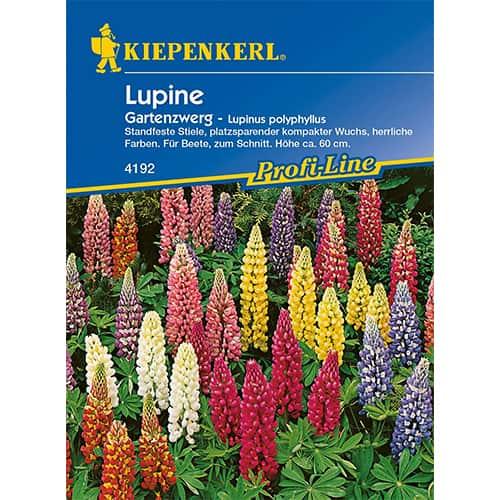 Lupin pitic de grădină imagine 1 articol 77449