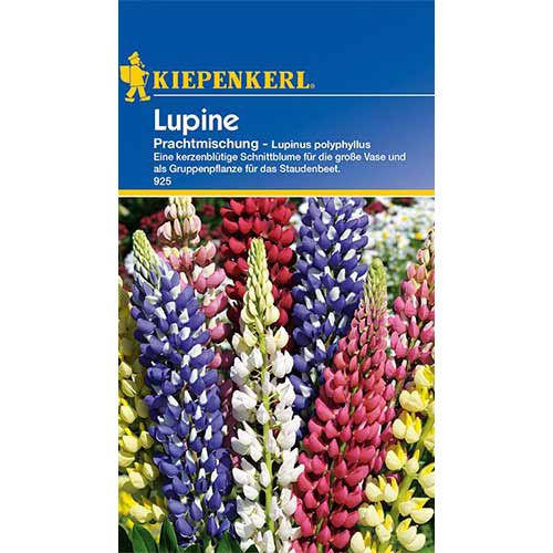 Lupin Splendid, mix multicolor imagine 1 articol 86292