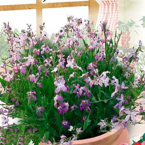 Mixandre roz-violet imagine 1 articol 65448