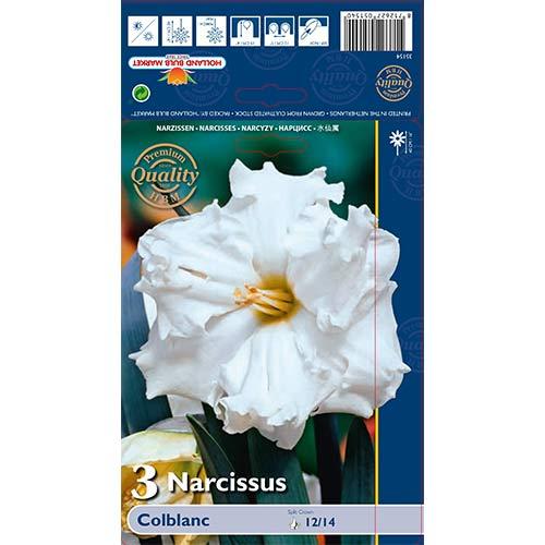 Narcise Colblanc imagine 1 articol 67648