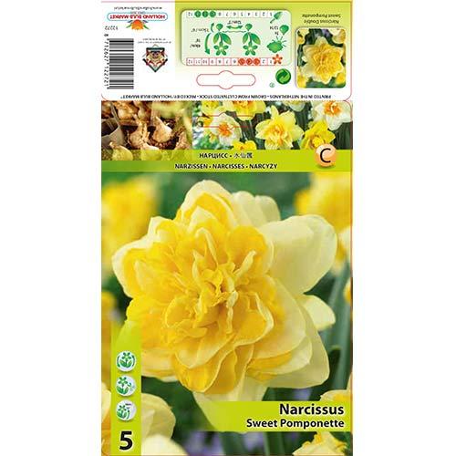 Narcise Sweet Pomponette imagine 1 articol 67414