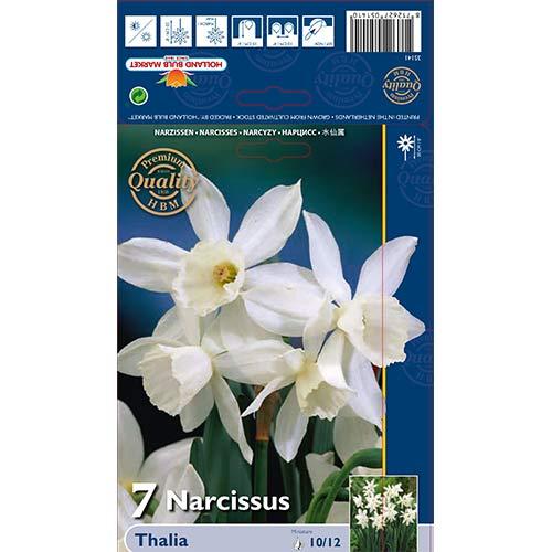 Narcise Thalia imagine 1 articol 70236