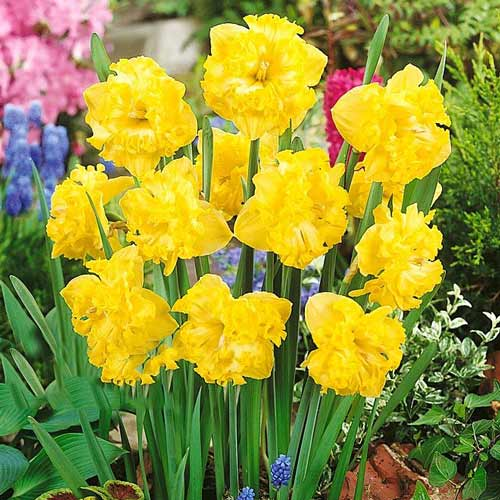 Narcise Flyer imagine 1 articol 67433