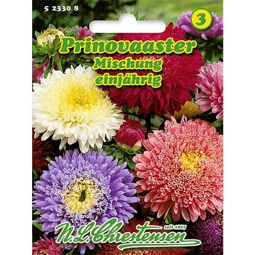 Ochiul boului Prinovaaster, mix multicolor imagine 1 articol 86137