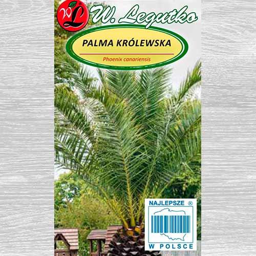 Palmier imagine 1 articol 69616