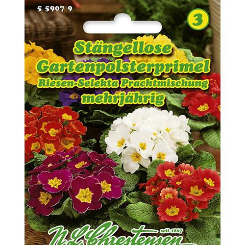 Primula Giant Selekta, mix multicolor imagine 1 articol 86181