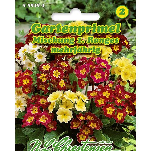 Primula, mix multicolor imagine 1 articol 86183