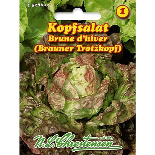 Salată Brune d'hiver imagine 1 articol 86056