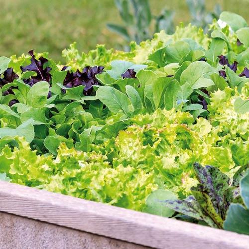 Salată imagine 1 articol 65441