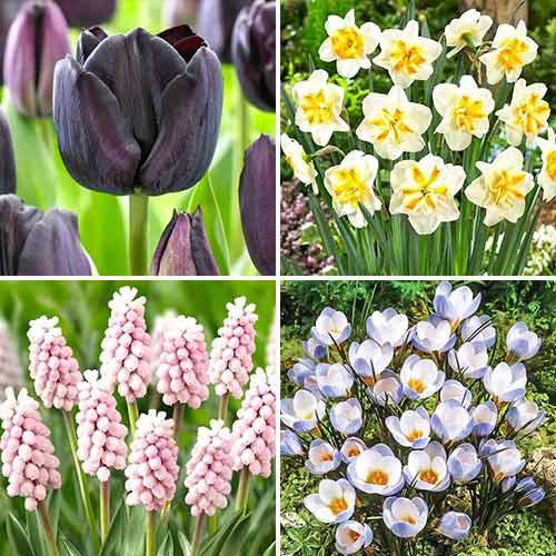 Super ofertă! Bulbi de flori Spring Garden, set de 4 soiuri imagine 1 articol 70320