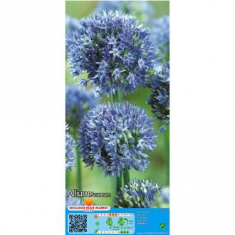 Allium Azureum imagine 8