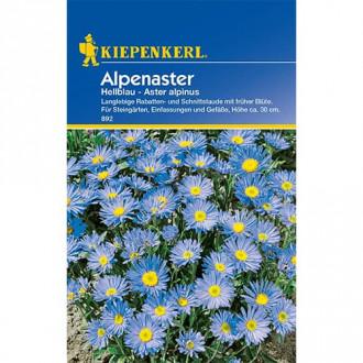 Aster alpin Light Blue imagine 6