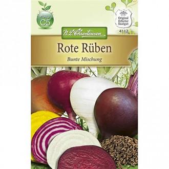 Aster alpin imagine 7